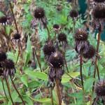 dead-flowers-1106612990840566Bt