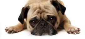 Pets Are Still Homeownership's Secret Weapon